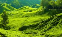 Cameron-Highlands-700x400.jpg